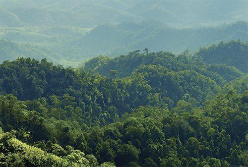 [오래, 함께] 따뜻한 봄날, 숲길을 거닐다!